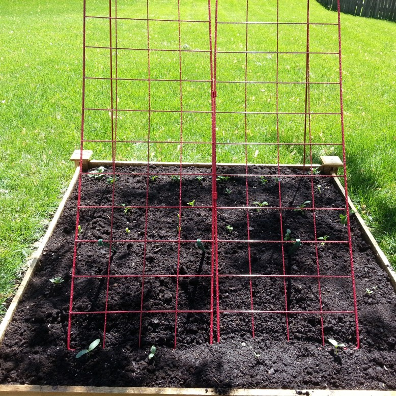garden-bed-7