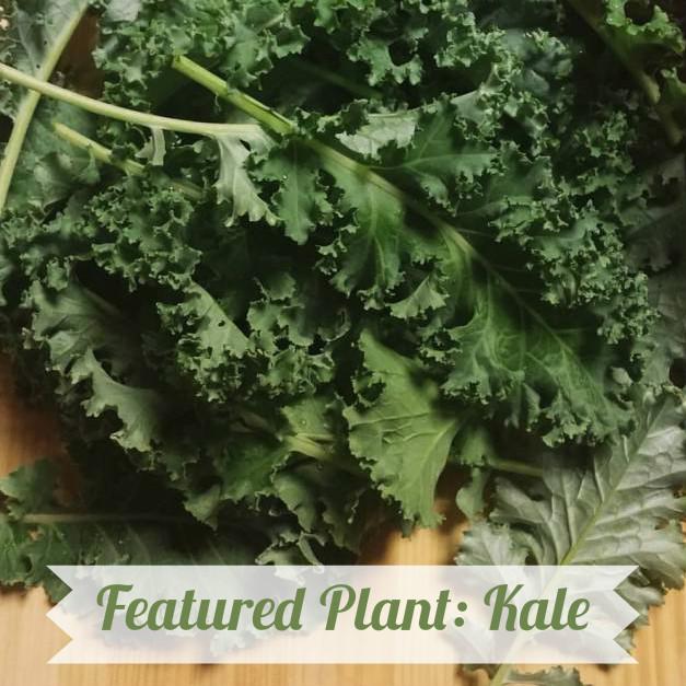 Kale title photo.jpg